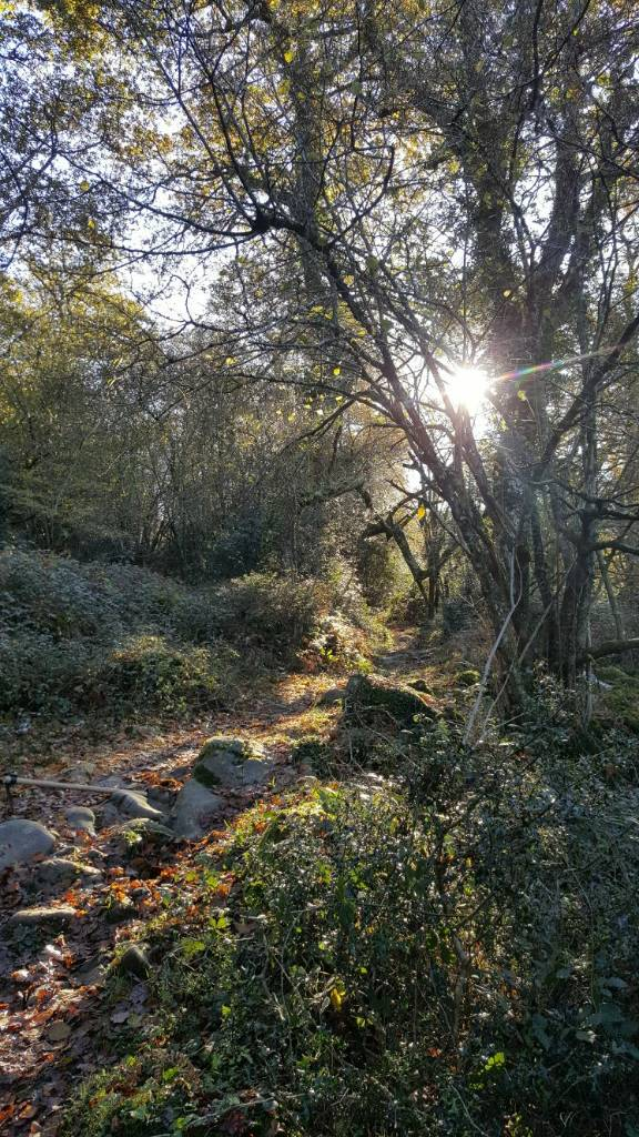 MonteTejas_trailbuilding